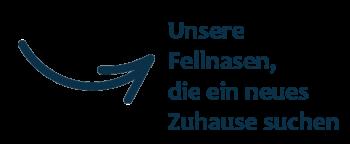 Care4Life-Hinweis-Fellnase-Vermittlung-blau